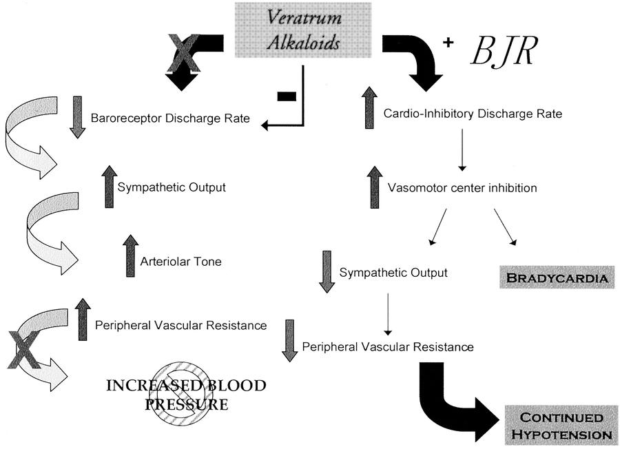 Hipertensión por reflejo de arco